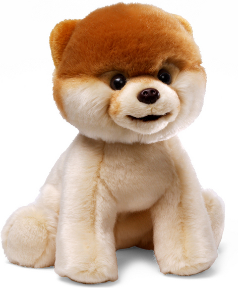 Mother's Day Gift Guide: Boo the Adorable Pomeranian!