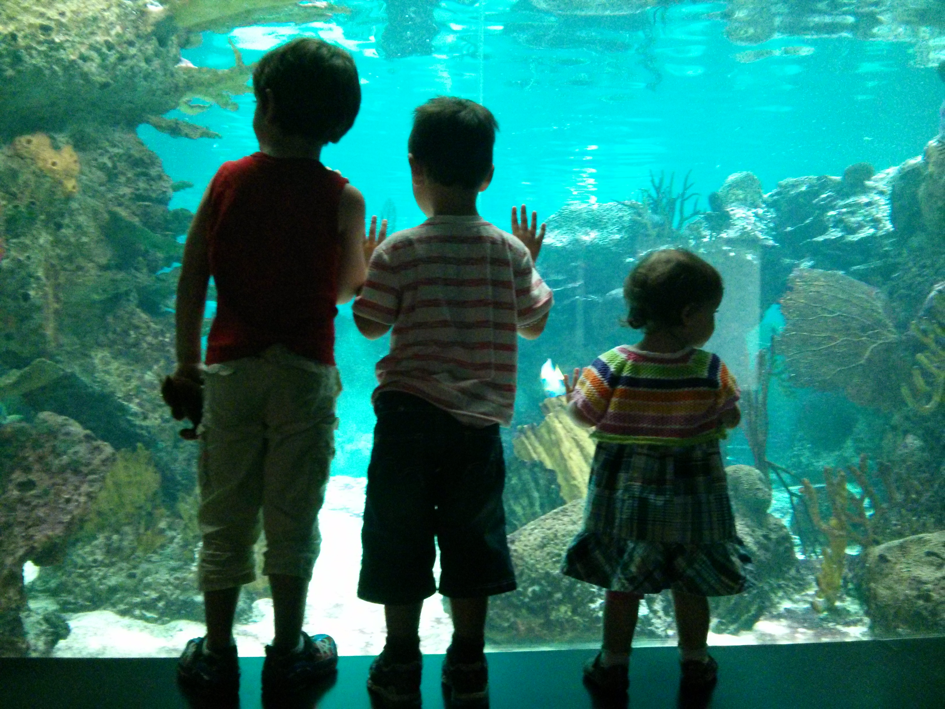 A Visit to the newly reopened NY Aquarium #ConeyComeback